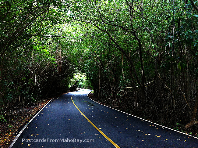 Road heading past the mangrove swamp to Annaberg Sugar Plantation Ruins.