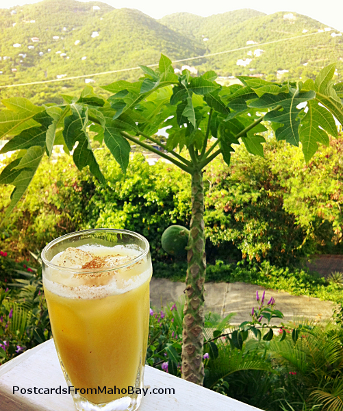 The famous Caribbean concoction, the Painkiller, with the mountains of Coral Bay, St. John in the distance, and a papaya tree directly behind the drink.