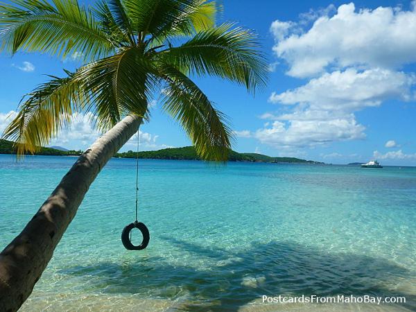 View from Oppenheimer Beach where someone has so generously hung a tire swing from the coconut palm!
